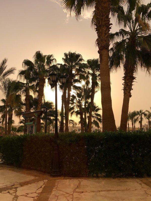 вечер,египет,пальмы Вечерние красотыphoto preview