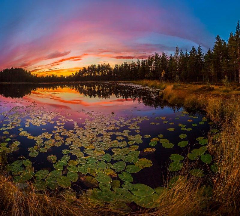 ленинградская область, сосны, отражение, покой, озеро, осень, небо, облака, кувшинки, берег, сумерки, закат, Озеро кувшинокphoto preview
