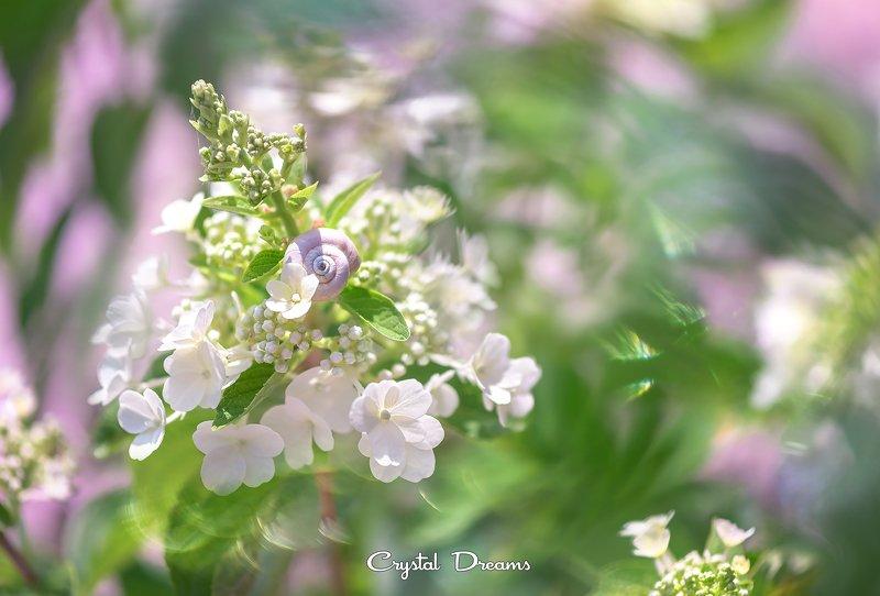 crystal dreams, macro, summer, color, art, nature \