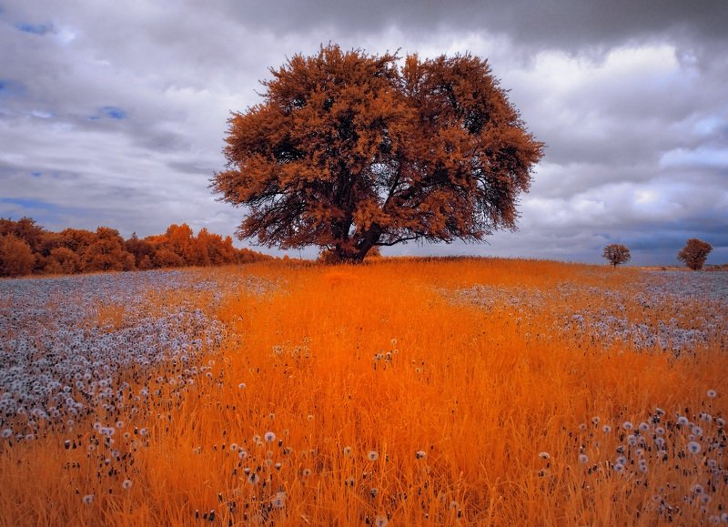 infrared,ик-фото,инфракрасное фото, инфракрасная фотография, пейзаж, весна, беларусь В теплых травах весны.photo preview