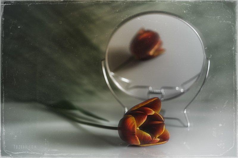 тюльпаны, апрель, красно-желтый, зеркало Про тюльпан с приветом из апреляphoto preview