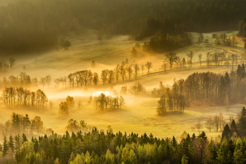 sunrise, morning, sun, green, beautiful, trees, forest, light, spring Foggy morningphoto preview