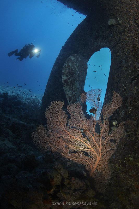 wreck diver gorgonaria propeller Горгонария.photo preview
