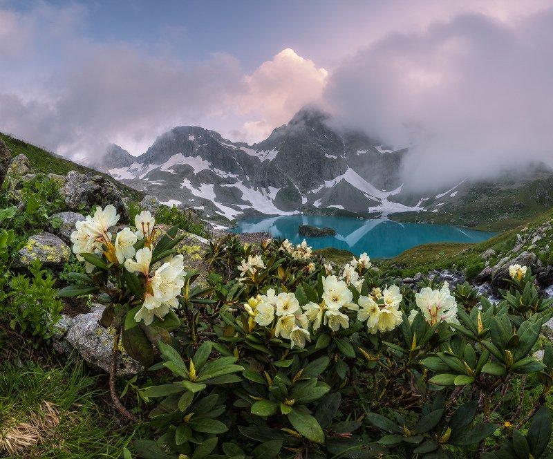 северный, кавказ,рододендрон, большое имеретинское, озеро безмолвия, вечер, июль, У озера Безмолвияphoto preview