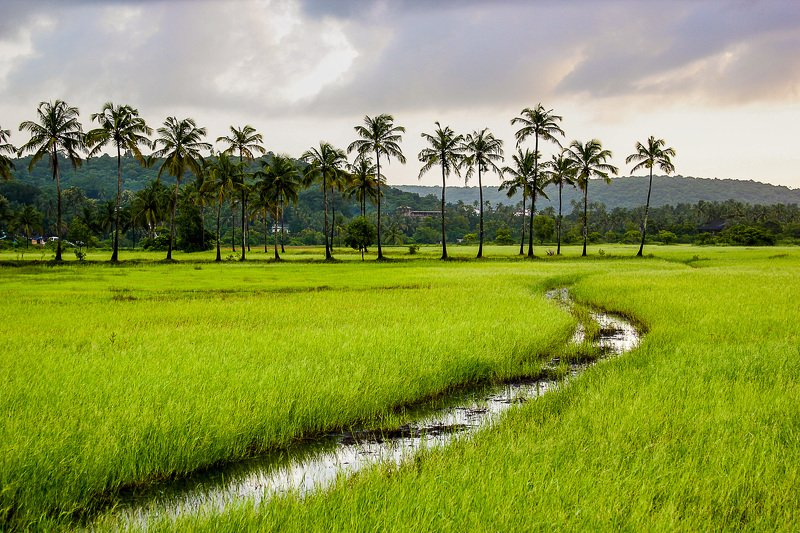 goa india Fresh Greensphoto preview