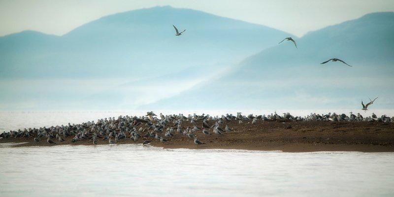 Утро на озере Бусе. Сахалинphoto preview