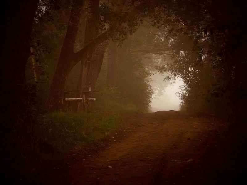 туман, лес, стол, дорога Дымно-туманное утроphoto preview