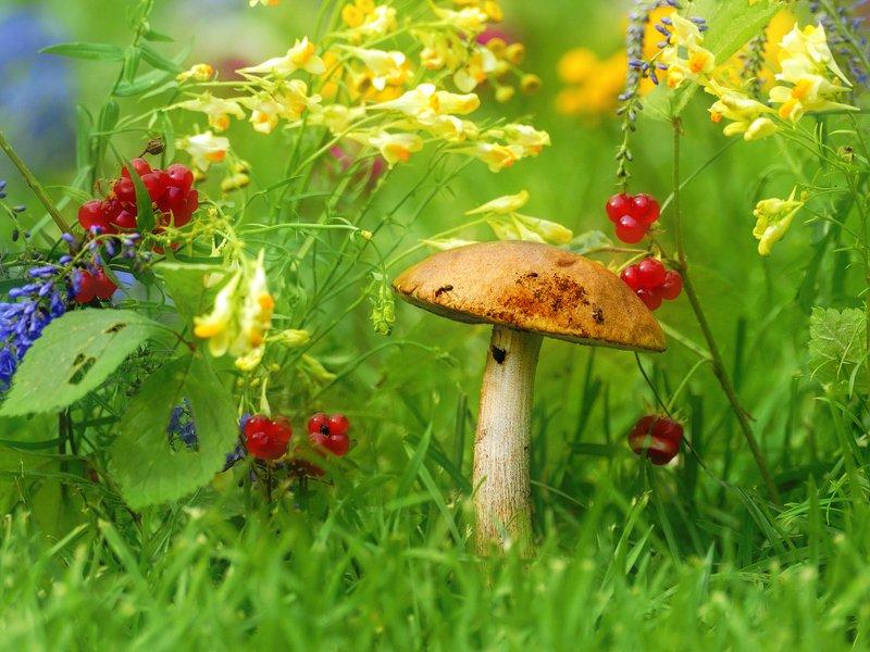 природа,  цветы, лето, грибы Последний месяц летаphoto preview