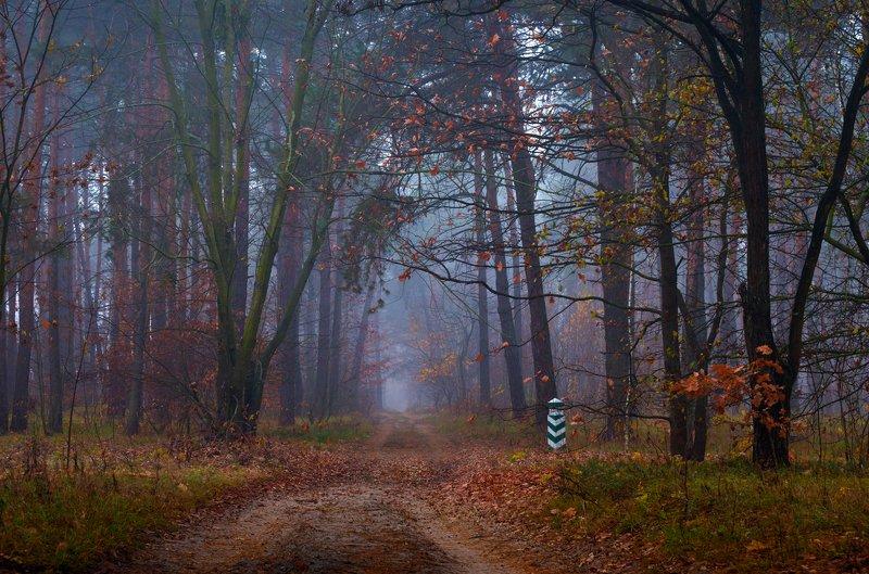 лес, осень, ноябрь, туман Осенние акцентыphoto preview
