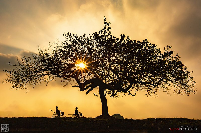 quanphoto, landscape, sunset, sundown, rural, countryside, farmers, lonely_tree, vietnam Rural Sunsetphoto preview