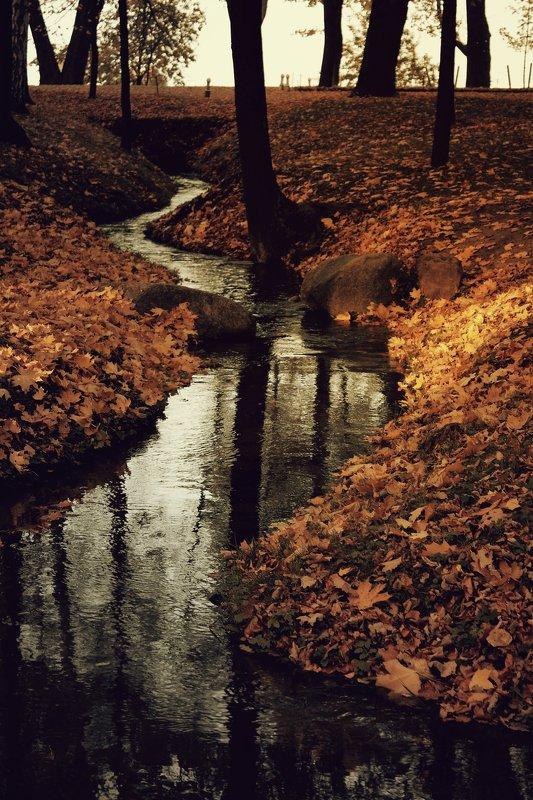 вода, листья, осень, парк, ручей, природа black waterphoto preview