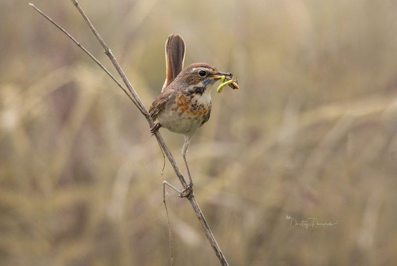 природа, лес, животные, птицы С добычейphoto preview