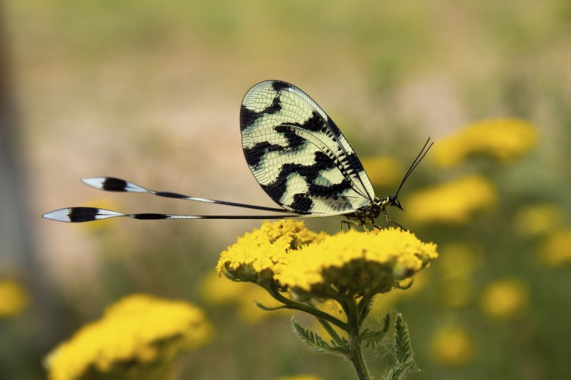macro,art,butterfly,colors,spring,wildlife,life,freedom,passion,peace,photography, FREEDOMphoto preview