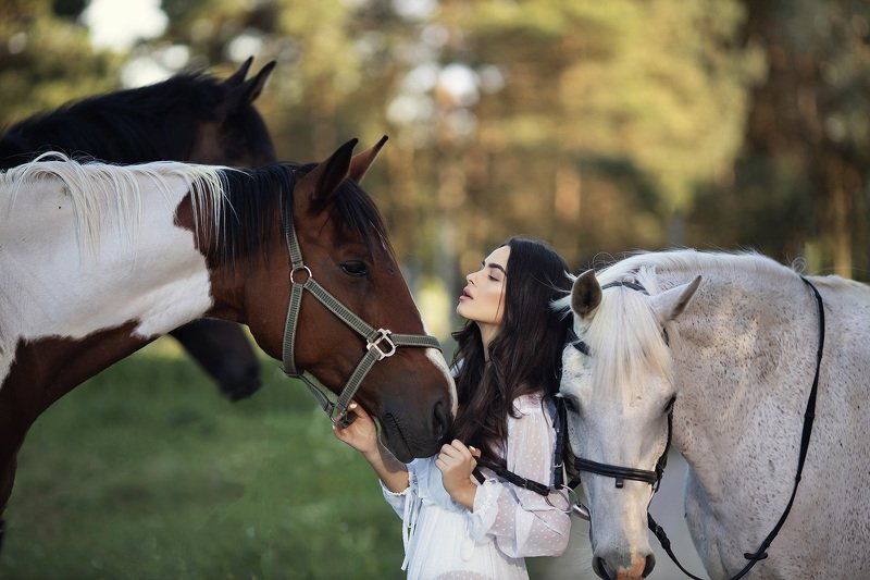 horses *photo preview