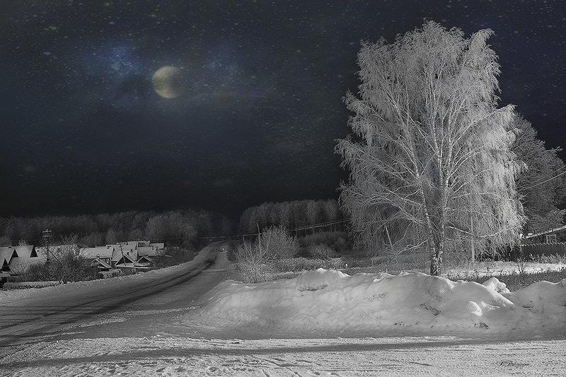 зима,береза,дорога, Береза белаяphoto preview