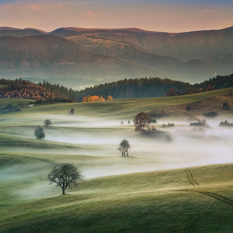 slovakia, morning, meadows, foggy, trees, mountain,  Foggy meadowsphoto preview