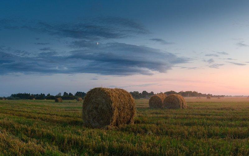 лето, поле, пшеница, вечер, закат, россия Скоро осень..photo preview