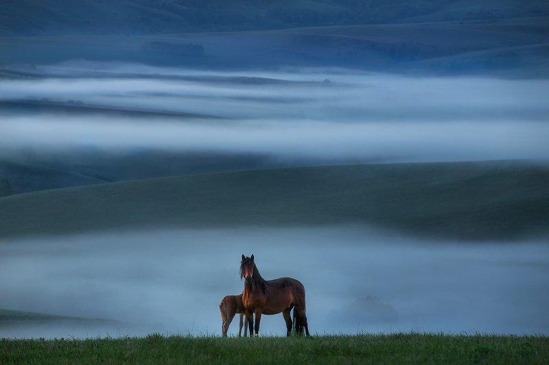 алтай, тревел, пейзаж, лошади, рассвет Предрассветная элегияphoto preview