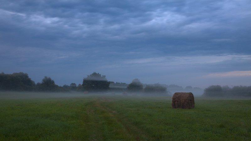 В тумане на лугуphoto preview