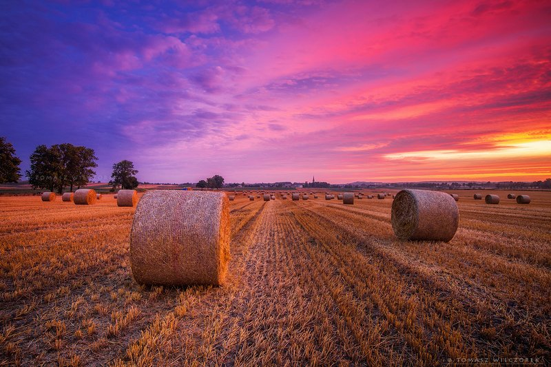 fields, poland, polish, landscape, sunrise, sunset, colours, spring, awesome, amazing, adventure, travel, beautiful, morning, grain Colours of sunrisephoto preview