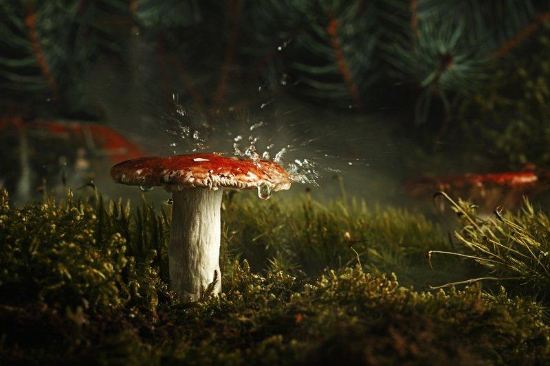 грибы природа лес дождь утро макро мох ель .photo preview
