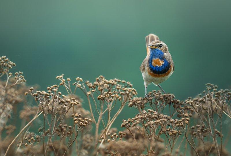 природа, лес, животные, птицы Красавчик фото превью