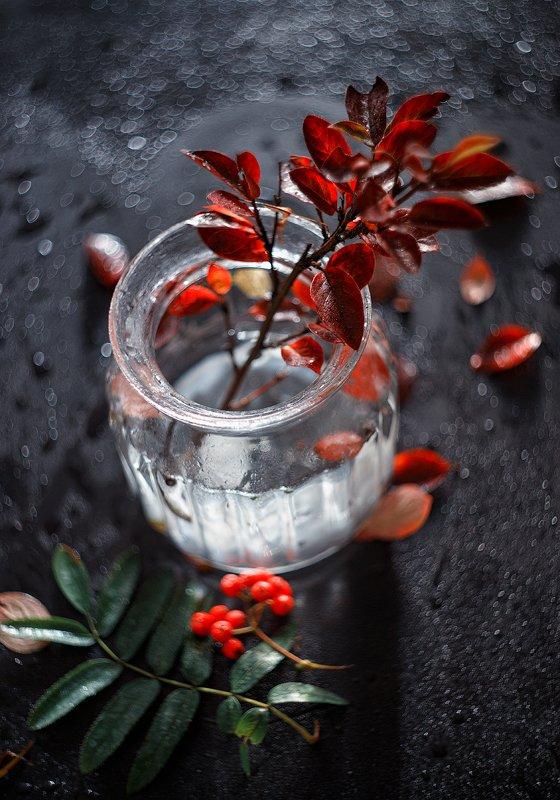 натюрморт листья вода ***photo preview