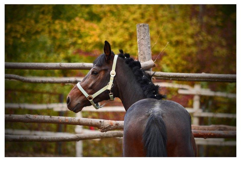 животные ,лошадь. Рыжий коньphoto preview