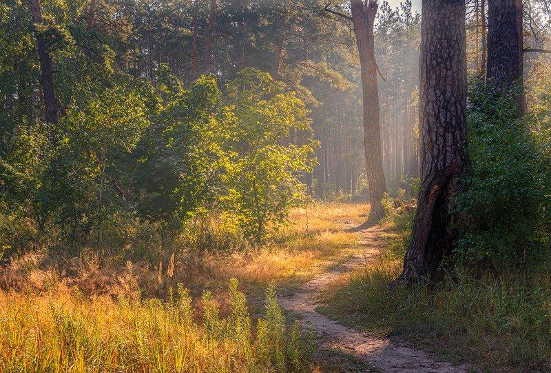 landscape, пейзаж, утро, лес,  деревья, солнечный свет,  солнце, природа, солнечные лучи,  прогулка, хорошее утроphoto preview