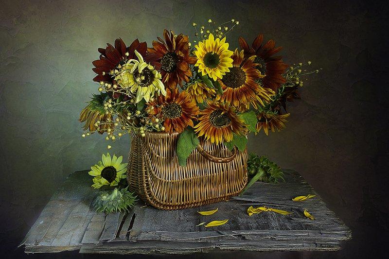 подсолнухи,карсивые,букет,корзинка,вера павлухина,натюрморт,цветы, Черноглазые подсолнухи c золотистыми ресницамиphoto preview