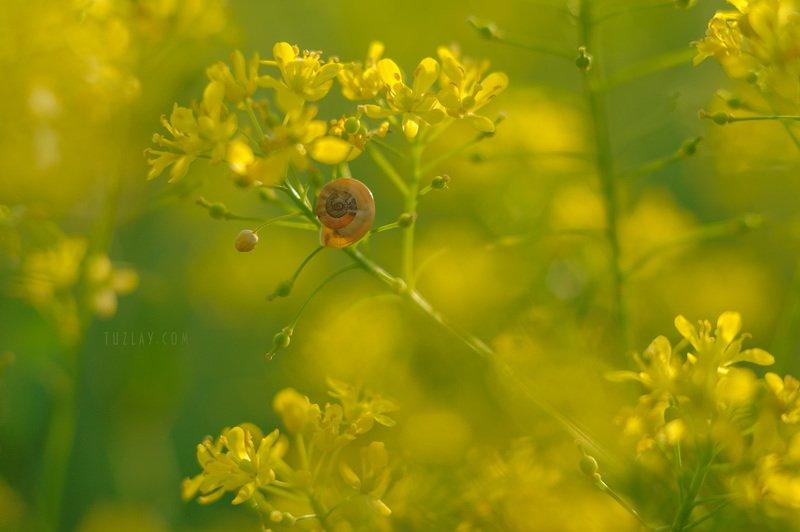 желтые цветы, трава, улитки Солнечный Жёлтыйphoto preview