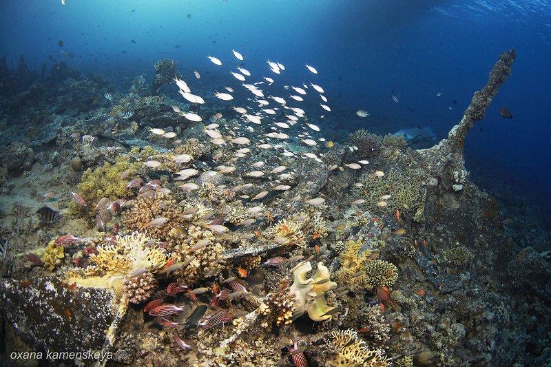 Подводный пейзажphoto preview