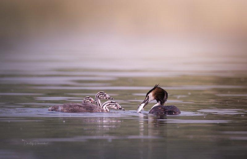 природа, лес, животные, птицы Завтрак горыныча фото превью