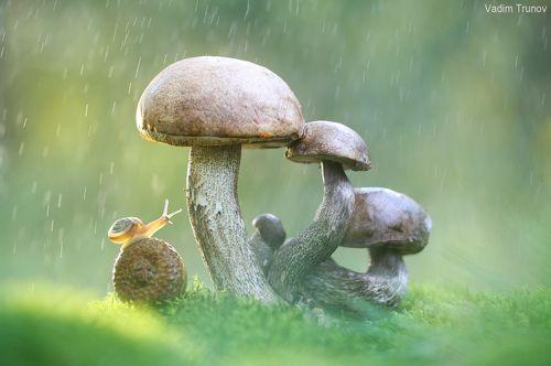 Под дождиком
