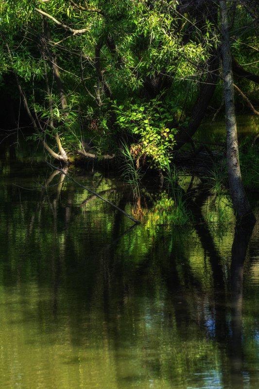 балашиха, пехорка, заросли В дебрях маленькой рекиphoto preview