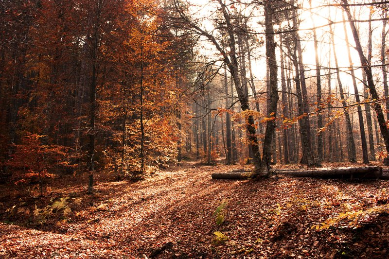 landscape,view,autumn,forest,art,fall,colors,travel,image,photography,freedom,life,peace, AUTUMNphoto preview
