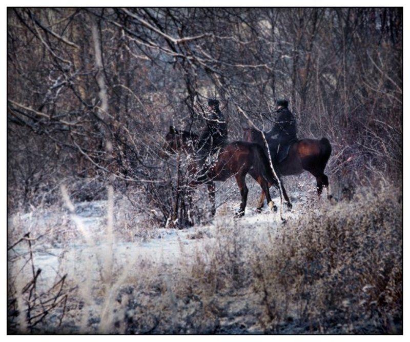 парк,наездники,всадник,кузьминки,москва,лощадь,патруль,зима,снег Всадникиphoto preview