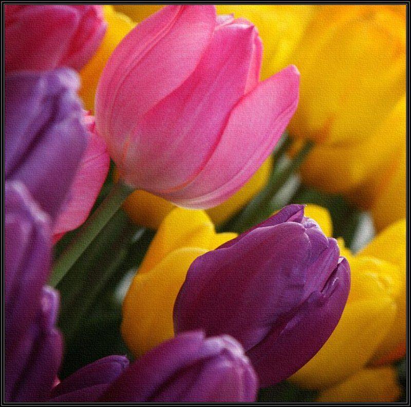 тюльпаны, цветы, япония, 8 марта, весна С ПРАЗДНИКОМ!photo preview
