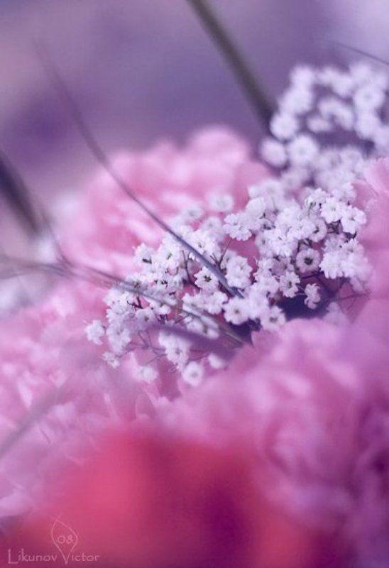 8 марта, цветы, arhy 8photo preview