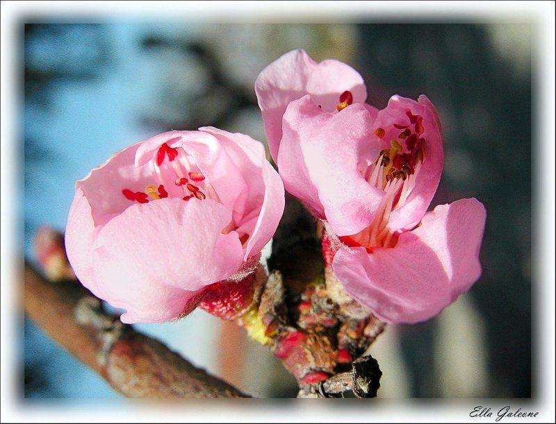 Весна наступилаphoto preview