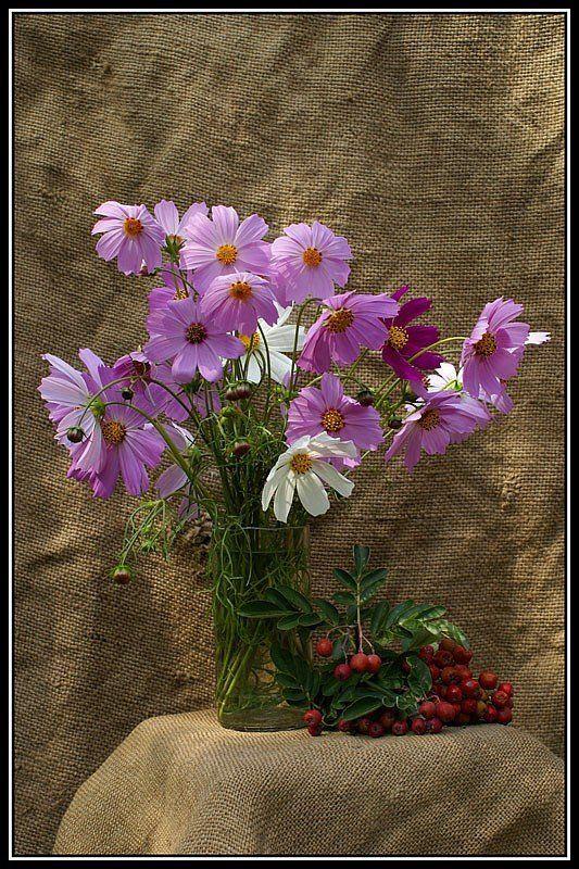 натюрморт, ромашка садовая Этюд с букетом ромашек садовыхphoto preview