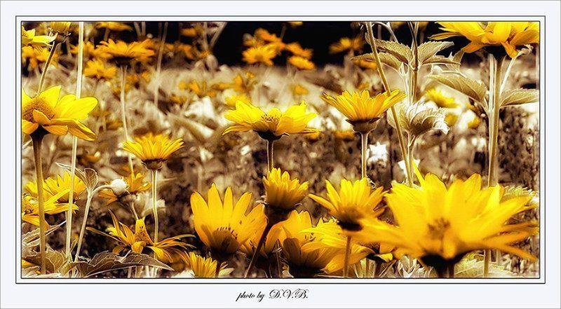 летнееphoto preview