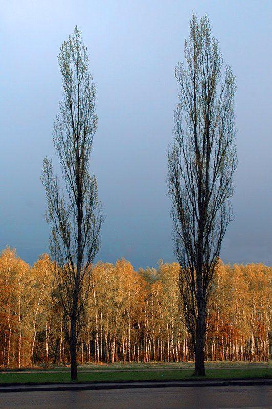 2007 май, пасмурный вечер, небо, берёзы, тополя Хмурый майphoto preview
