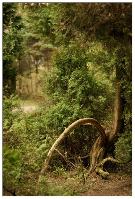 москва,парк,пейзаж,canon,30d,сад,дерево,зелень,кусты,трава photo preview