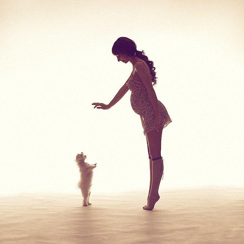 беременность, собака, свет, игра ||photo preview