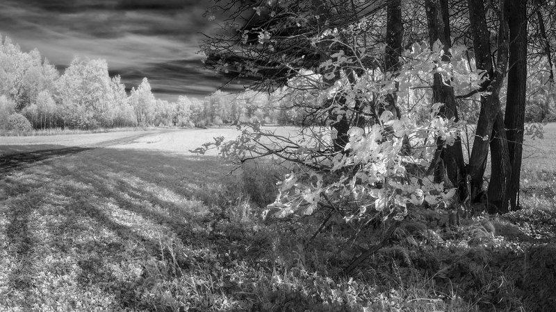 IR 630nm ч/б пейзаж Рваные листья.photo preview