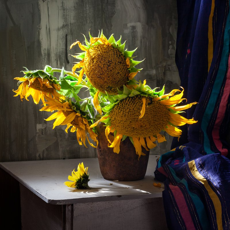 натюрморт, цветы, подсолнух, still life, sun flowers Подсолнухиphoto preview