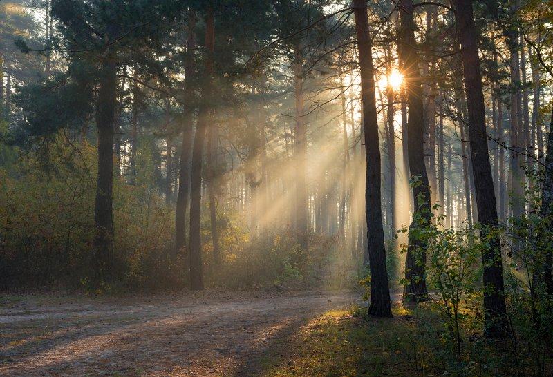 лес, осень, октябрь, утро, рассвет, туман, лучи Видна лучей играphoto preview