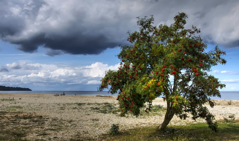 На берегу заливаphoto preview