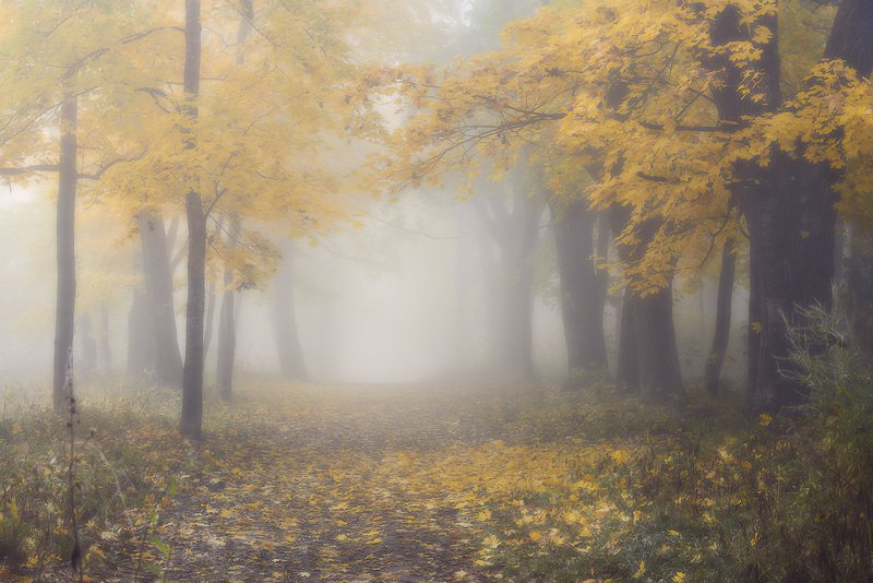 осень смоленск парк реадовка реадовский парк туман photo preview